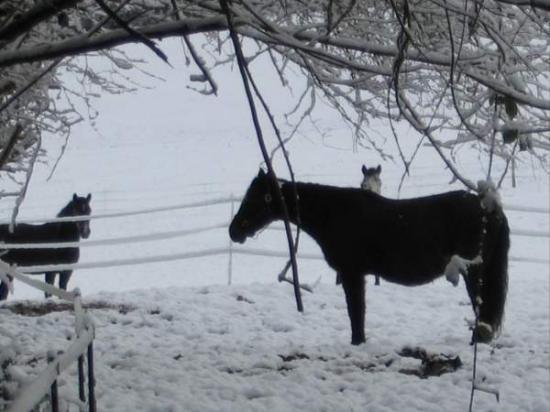ARGYL dans la neige